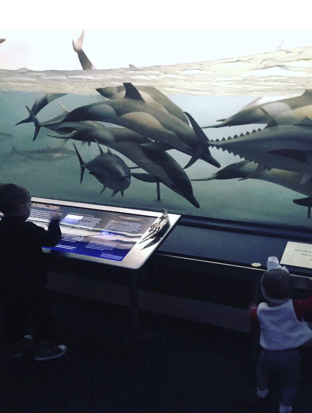child observing sea life at the museum of natural history