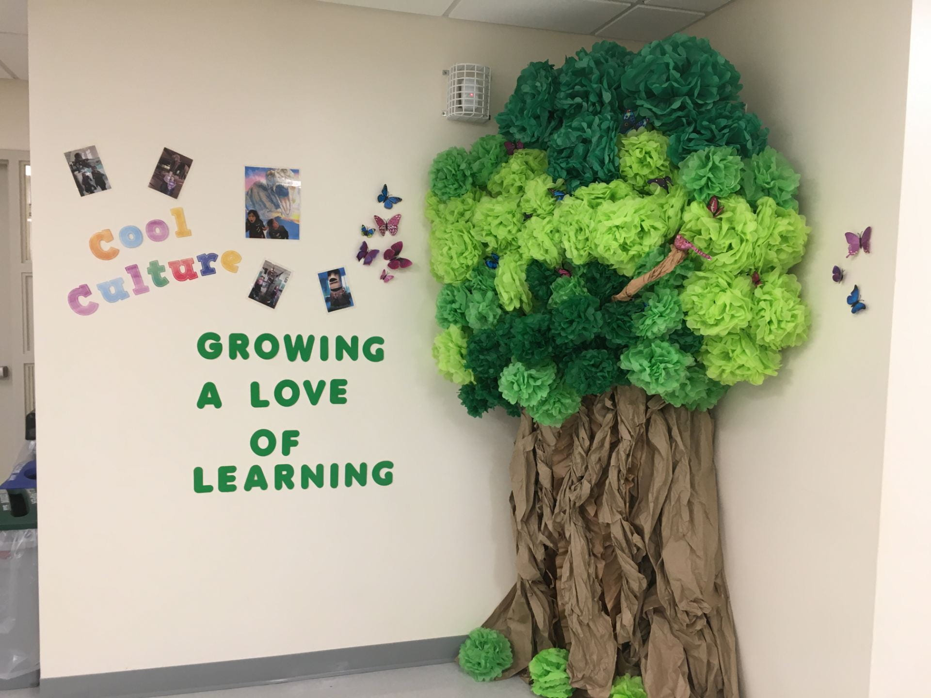 cool culture tree at the richmond prek center ebbits location